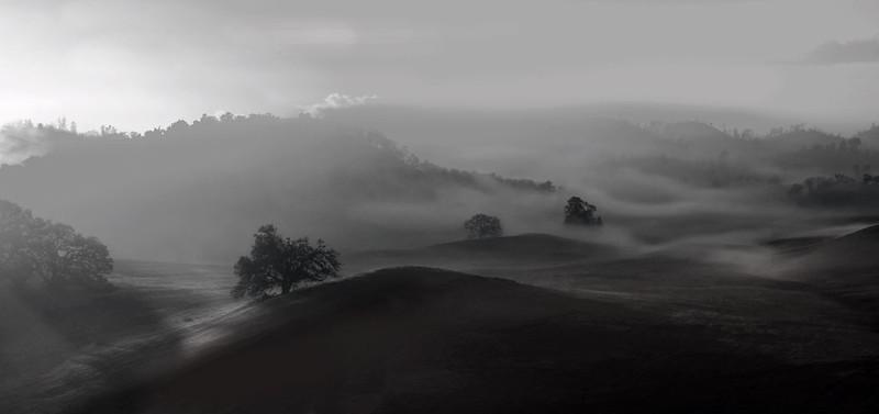 Trees-in-the-Mist-B&W.jpg