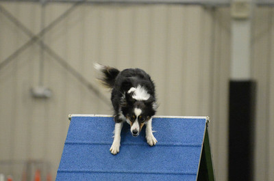SOJAC AKC Agility Trial March 25-26