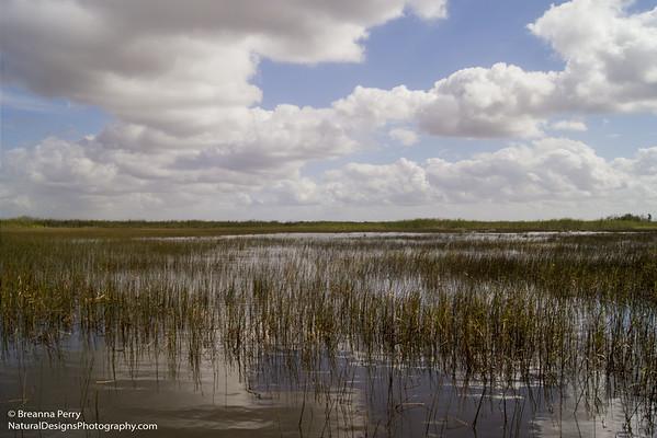 Everglades/Big Cypress
