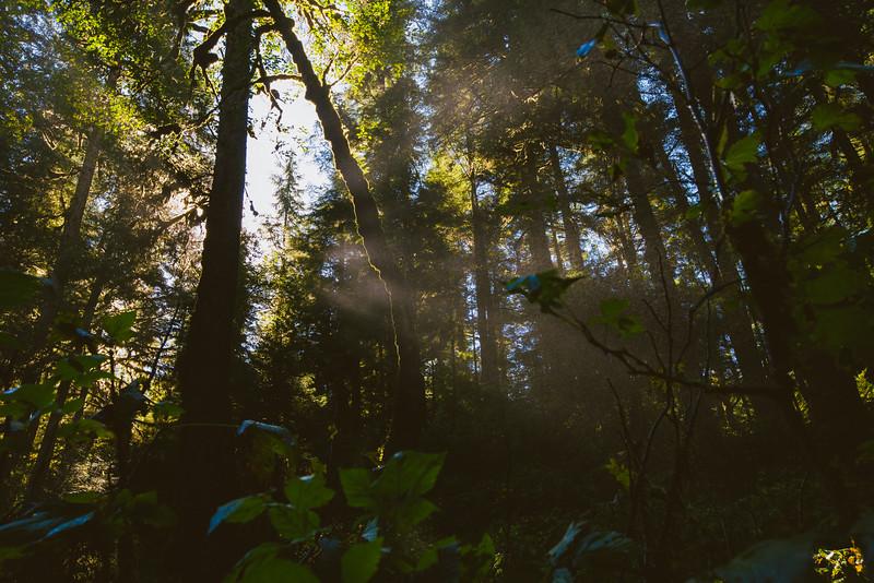 150910_GrizzlyForest_4056.jpg