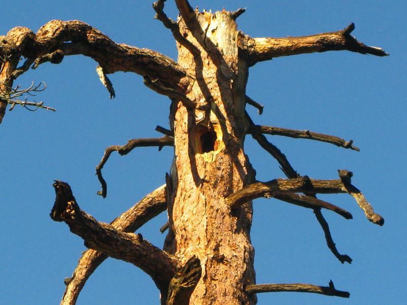 woodpecker made himself a nice home