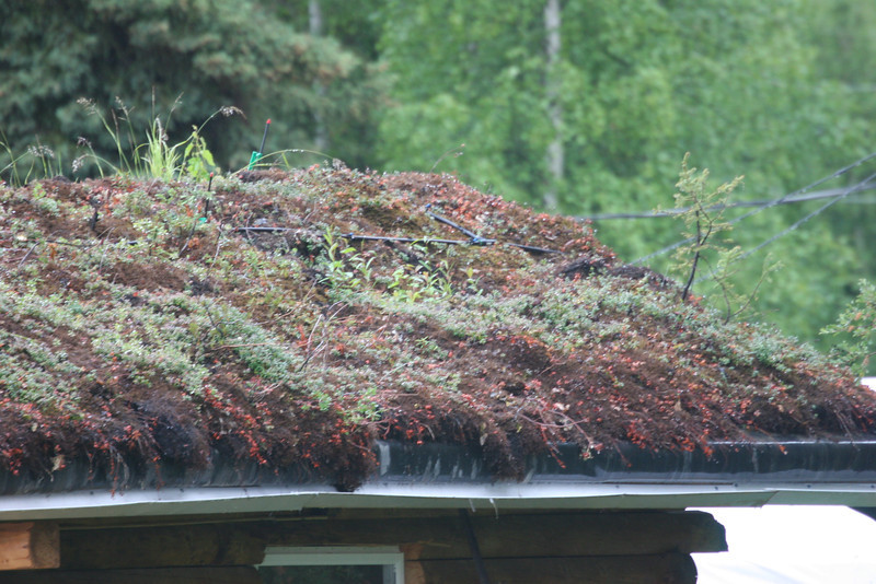 a truly green roof - lots of things growing on it