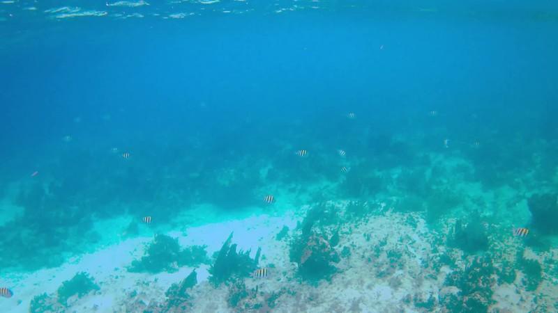 Snorkeling in Jamaica.mp4