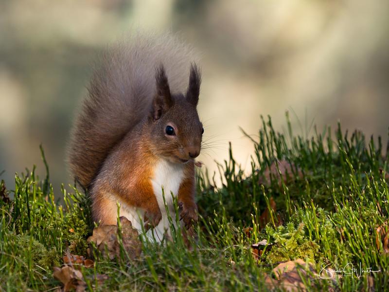 RedSquirrelBootCamp_130217_141.jpg