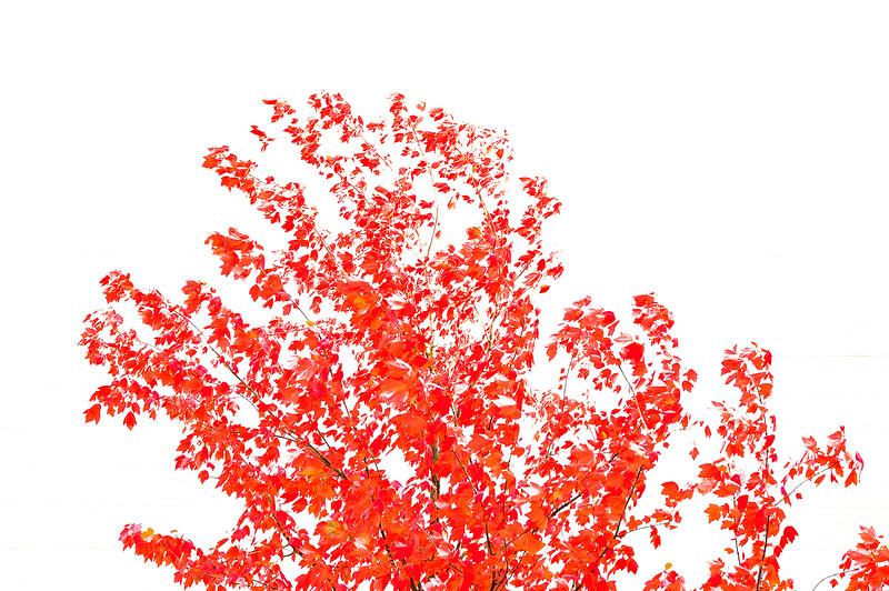_DSC2227_20061024_3008 x 2000-2.jpg