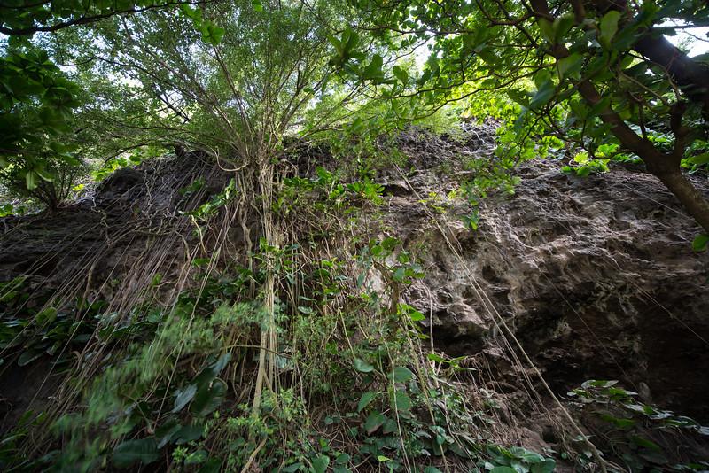 Kauai Vines