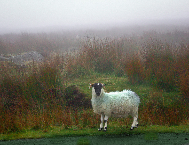 On the way to Mahon falls