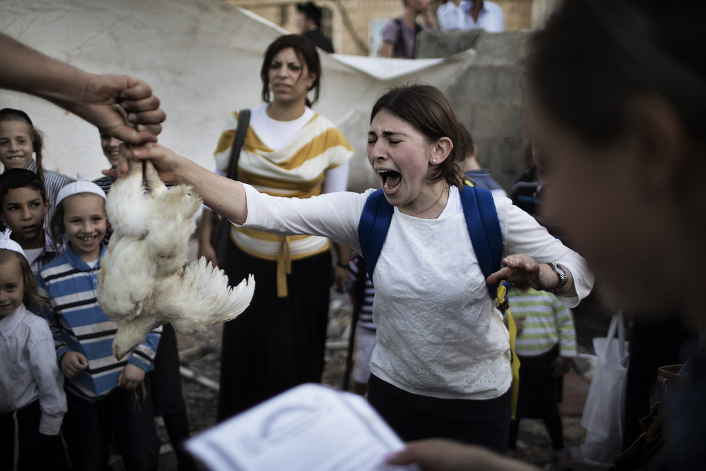 . A Jewish girl reacts as she receives a chicken that she will swing over her head during the Kaparot ceremony on September 11, 2013 in Jerusalem. T AFP PHOTO/MARCO  LONGARI/AFP/Getty Images