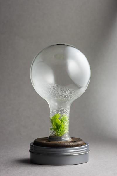 BioGlow BioBulb