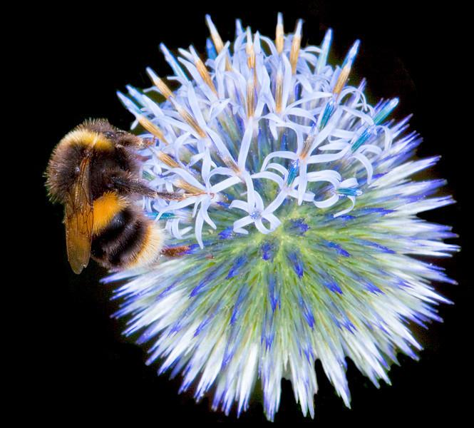 Bee lands_4975779425_o_8179360153_o.jpg