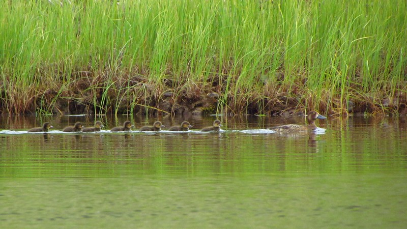 Lots of birds.  Eagle & hawk young had fledged, but many waterfowl were pretty young.  Maybe they migrate faster?