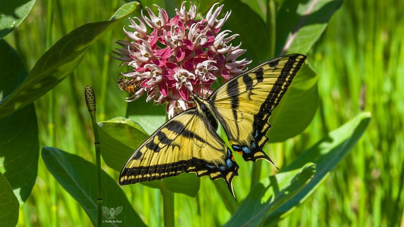 Roxy Butterfly 00 16x9.jpg