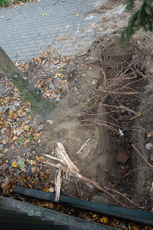 Uszkadzanie drzew SP112