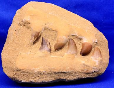 Mosasaur 207