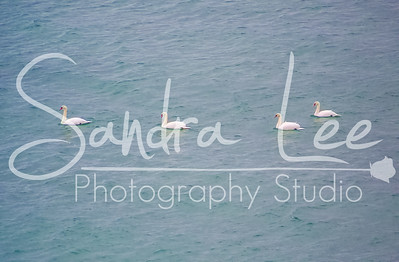 Photos of Leland Mi by Petoskey photographer, Sandra Lee