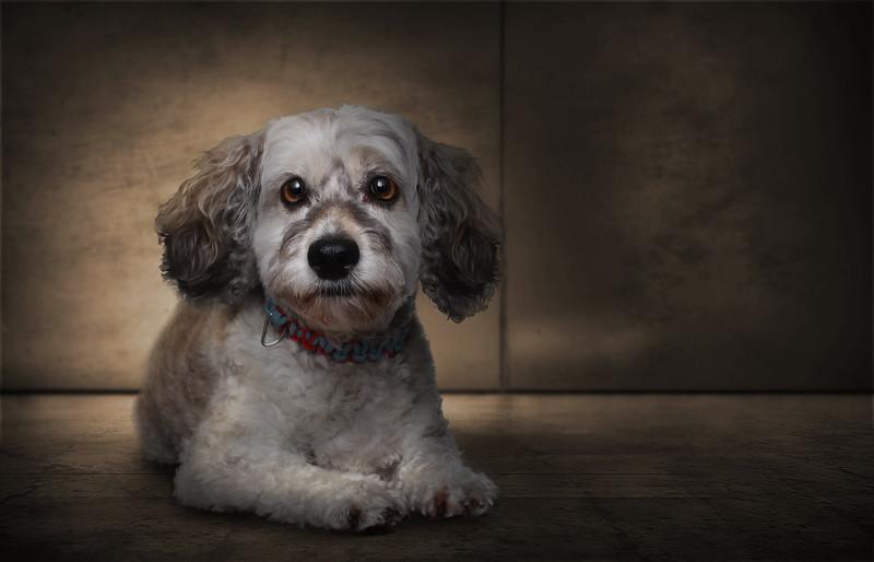 Roxboro-chien-2.jpg