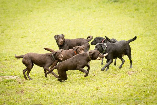 Labrador vom Rodebach