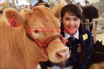 2013 LHVCF Beef