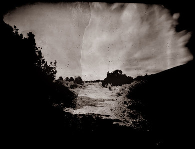 Portraits of an Altered Landscape