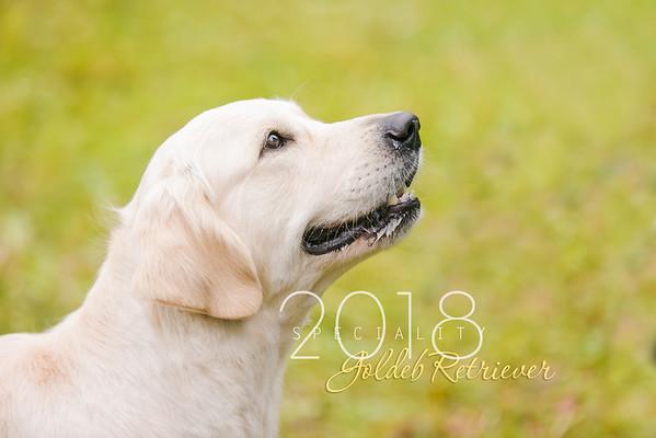 National Golden Retriever Speciality 2018
