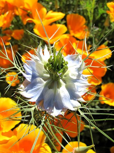 amh FLOWERS (1069).jpg