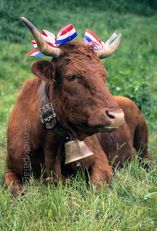 Cantal - the juiciest grass of France