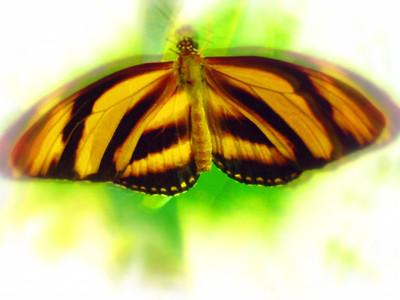 Airbrush Butterflies