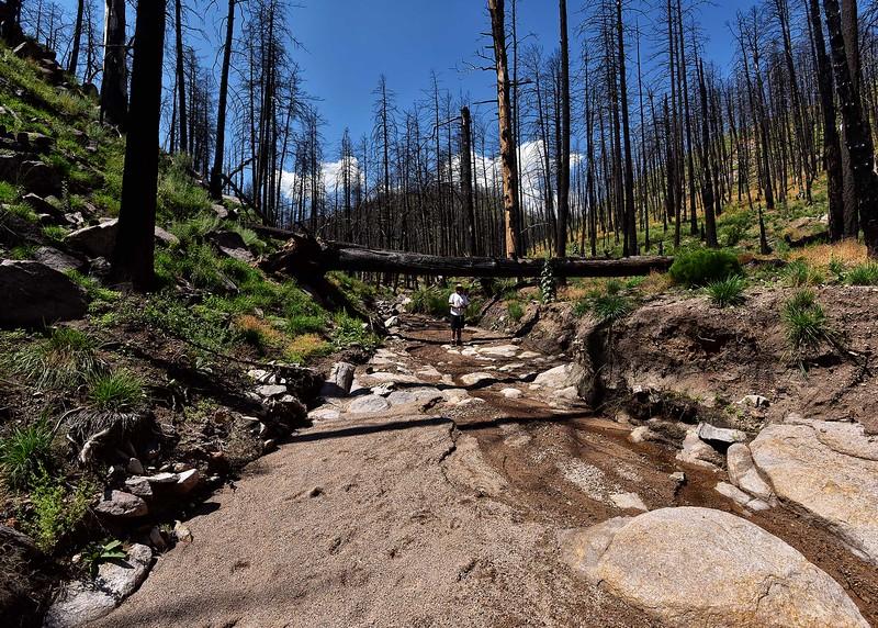 NEA_0272-7x5-Wills Canyon Trail.jpg