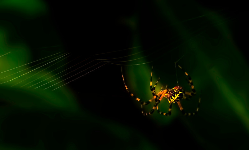 Spiders-Arachnids-148.jpg