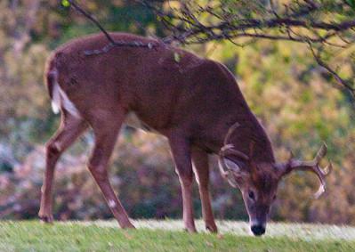 2009-10-11 Alan - Deer