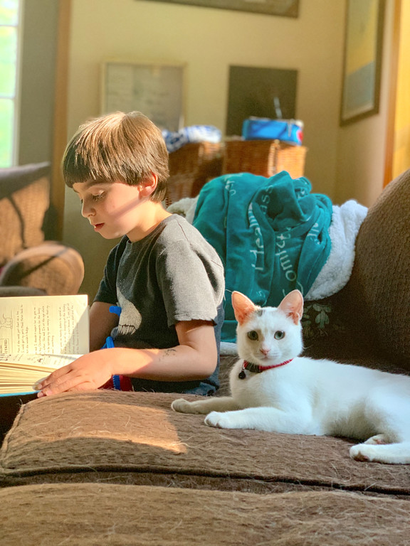 white cat and boy
