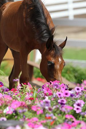 Bay Foal Flowers