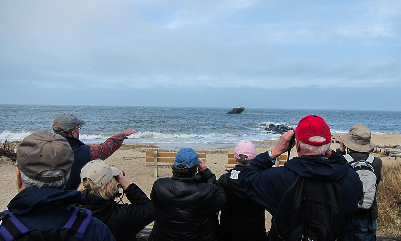 Mark pointing out the Northern Gannets flyong over the concrete ship.