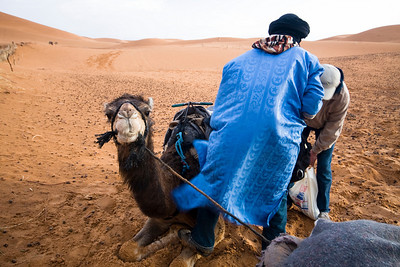 Camel trip to the Sahara