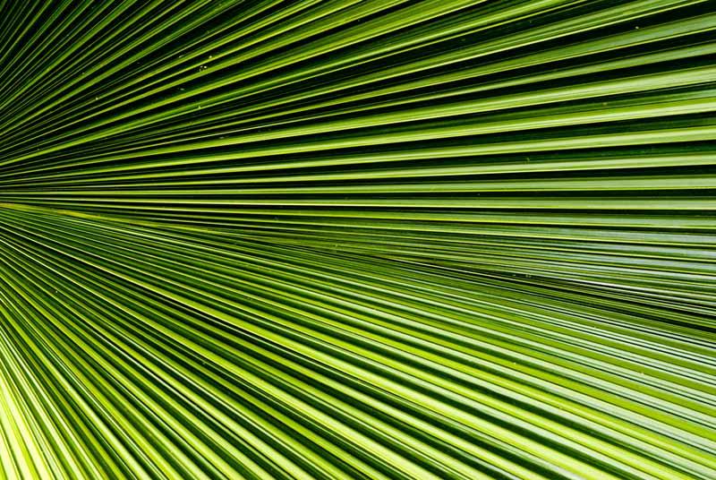 palmaccordian.jpg