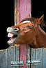 Photograph of funny head shot of a young horse. Photography fine art photo prints print photos photograph photographs image images artwork.