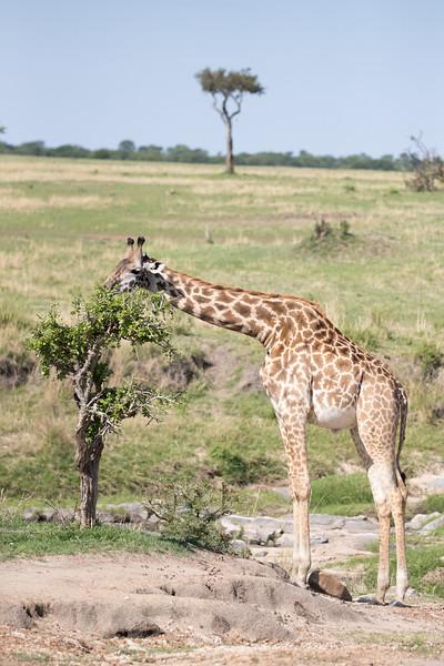 Africa - 101316 - 2350.jpg