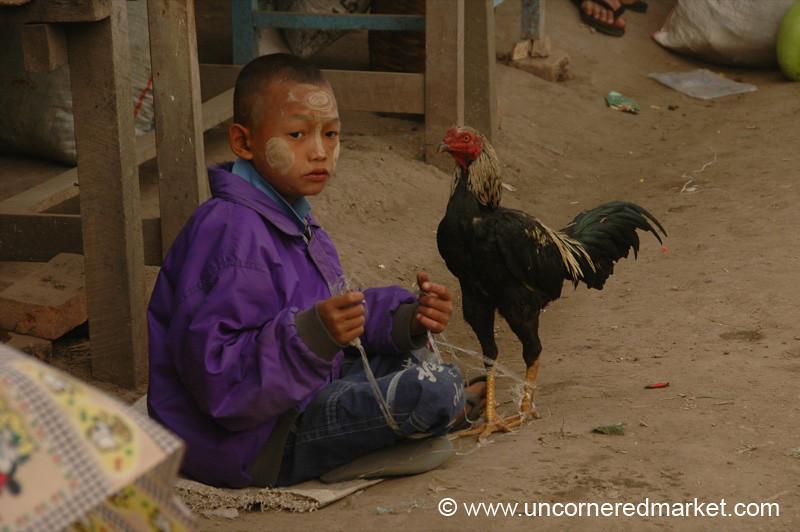 Burmese Boy and Rooster - Inle Lake, Burma