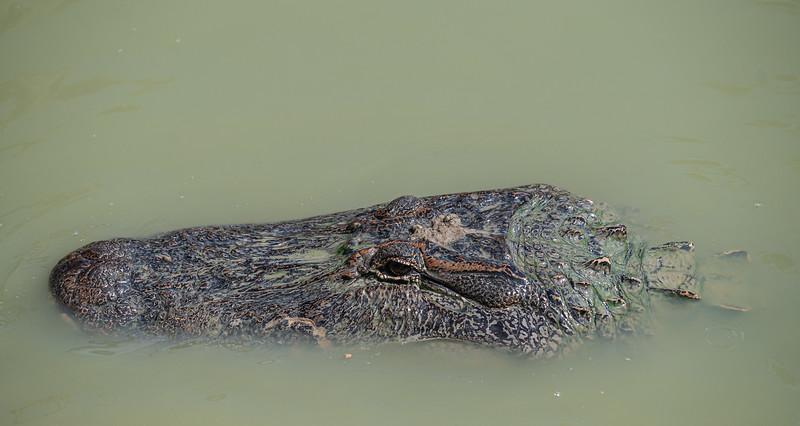 Gator-Country-8418.jpg