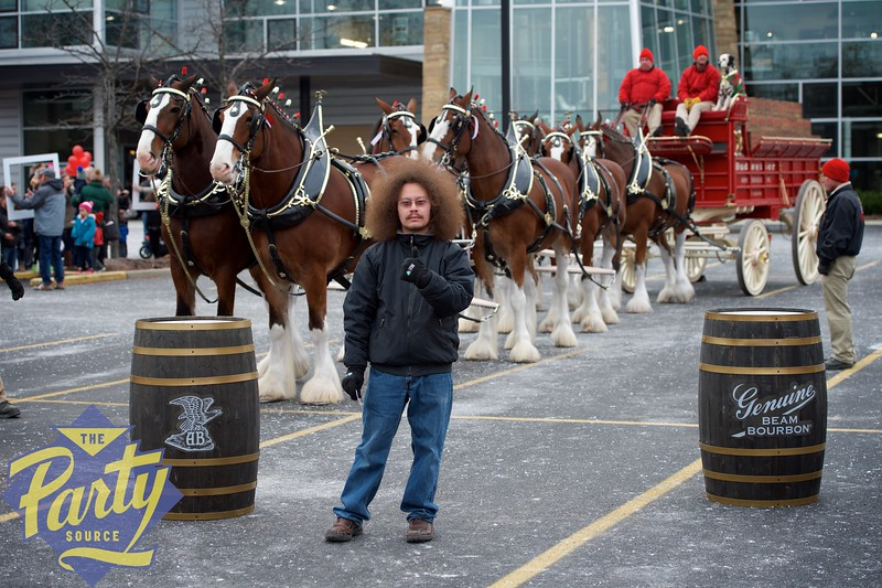 Clydesdale Portraits 38.jpg