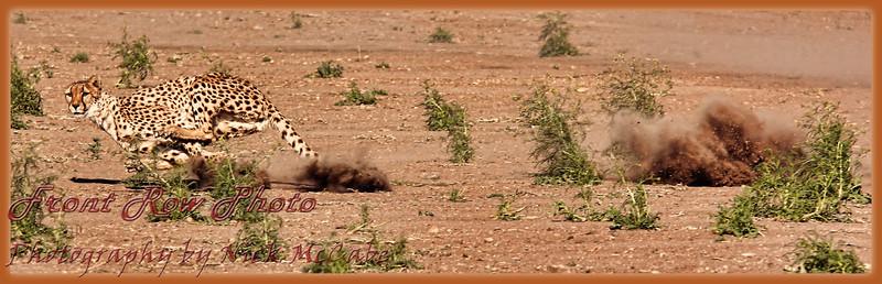 Cheetah Run at Animal Ark, Reno