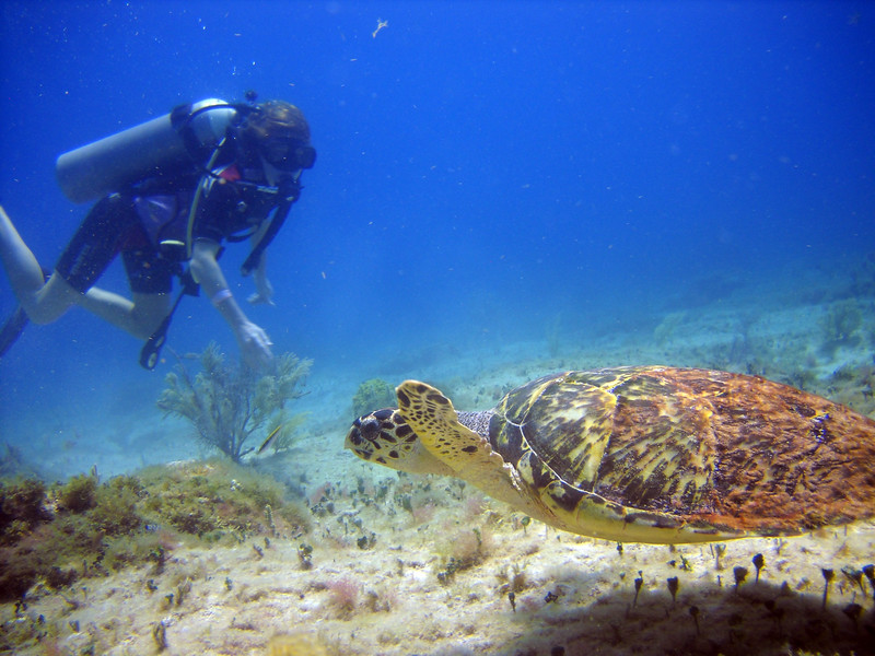 110805, Cancun Dive (34).jpg