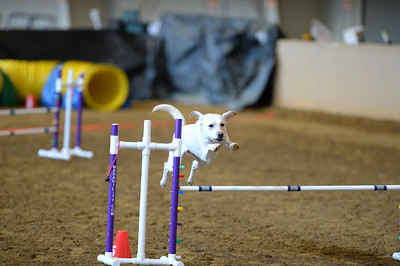 Keystone English Springer Spaniel Club AKC Agility Trial November 26-27