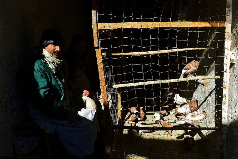 Description of . An Afghan vendor watches his pigeons in the old part of Kabul on December 25, 2012. Over a third of Afghans are living in abject poverty, as those in power are more concerned about addressing their vested interests rather than the basic needs of the population, a UN report said. MASSOUD HOSSAINI/AFP/Getty Images