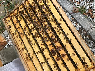 Hive #1 and #2  Early October Inspection 2017