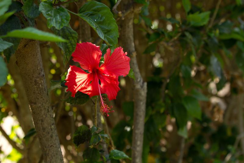 Hawaii2012-22.jpg
