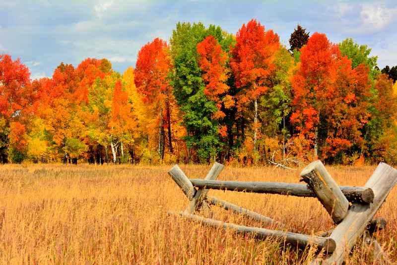 Buckwood-Fence-with-Brilliant-Fall-Colors.JPG