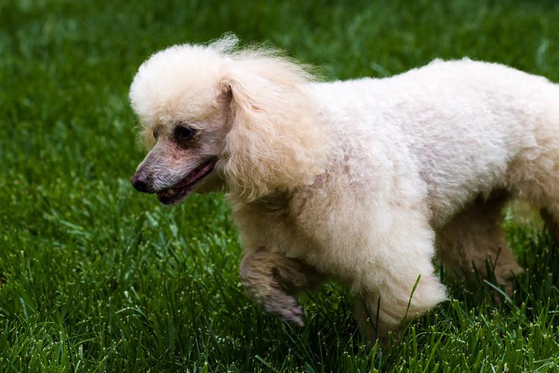 opal mike dogs (1 of 1)-112.jpg