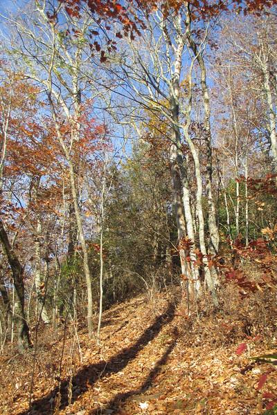 Overlook Trail - 4,380'