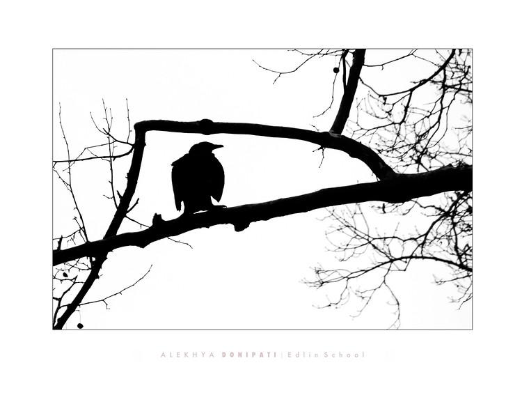 Donipati 1 - Raven.jpg
